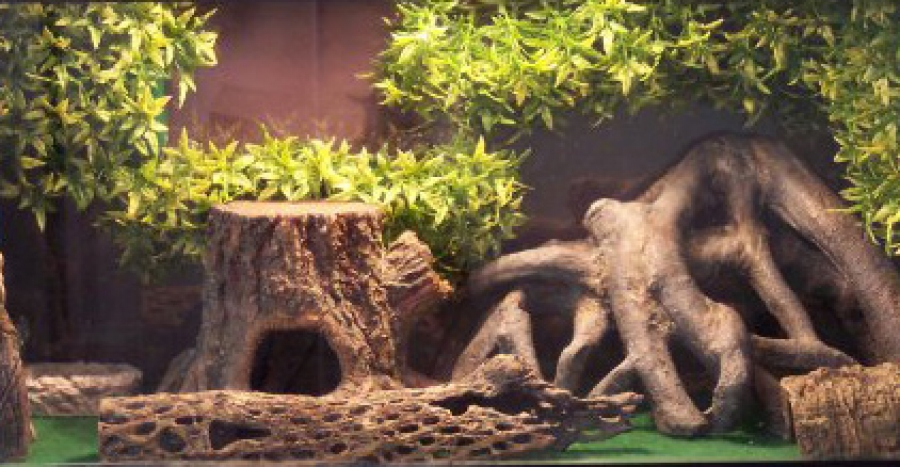 Leopard ... & Leopard Gecko Vivarium Lighting and Temperature Setting - Leopard ... azcodes.com
