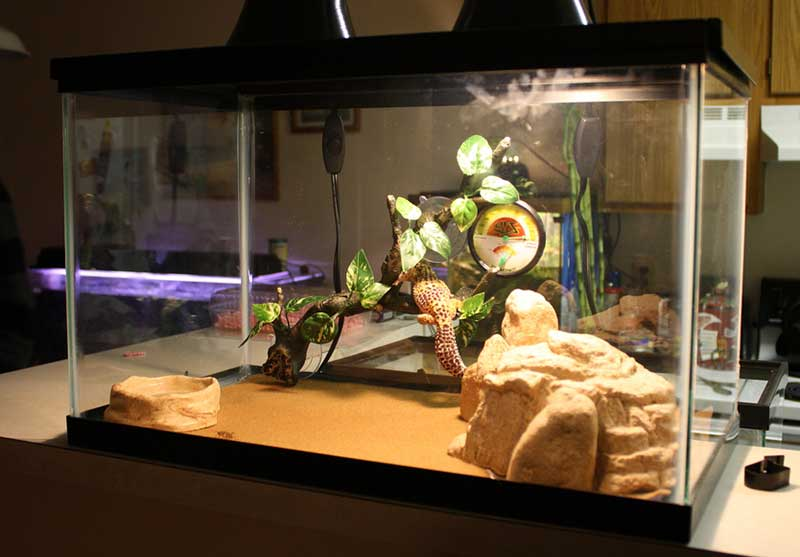 Although ... & Things to Consider for Correct Leopard Gecko Cage Temperature ... azcodes.com