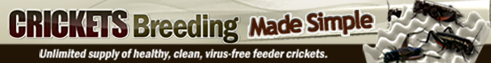 crickets-breeding-700x90