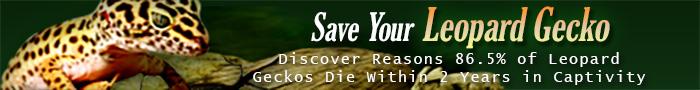 saveyourleopardgecko-700x90